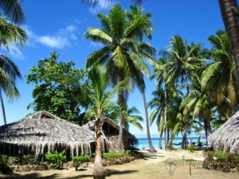 f595457d8f8d795af1a463fb512ab4db 1 480x360 - Красочный подводный мир и остров Тавеуни, Фиджи