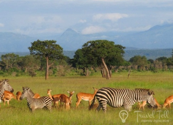 263af09dc349cc808d4a874fd05aa5b4 - Танзанийское сафари для детей - мы идем с Занзибара