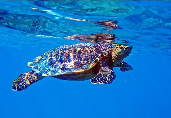 3510a7fe27bb7f84ef441ca3c854546b - Райский отдых на Мальдивах