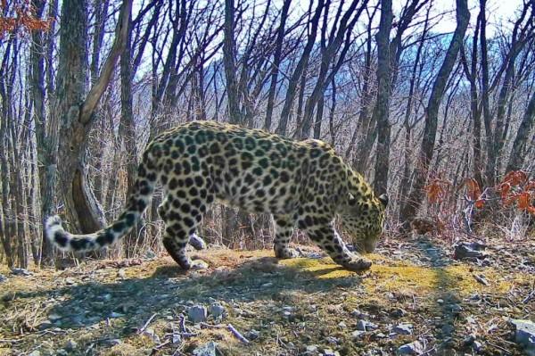 7d5353591ff96bd63578736e2508eac5 - «Земля леопарда» была помечена «королём» этих мест