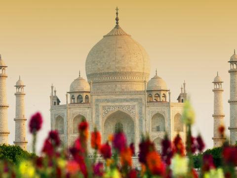 Taj Mahal India Agra 501892 1 480x360 - На Новый год в Индию