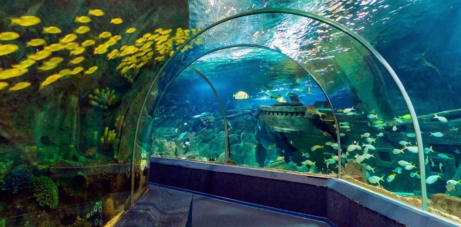adlerskij okeanarium - Адлер: достопримечательности и развлечения