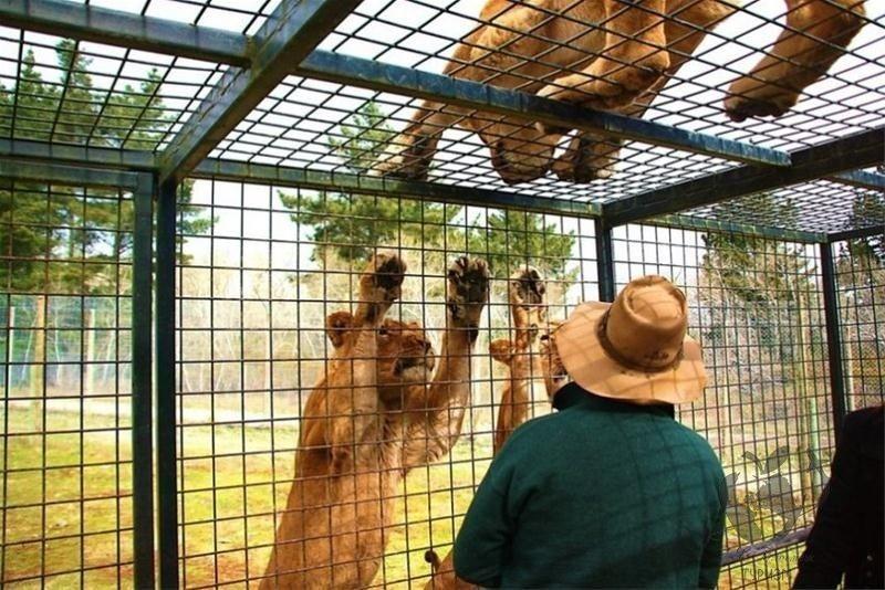 Novaya Zelandiya - Топ 10 интересных фактов из мира туризма