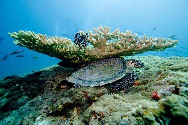 koraly maldivy - Отдых на Мальдивах