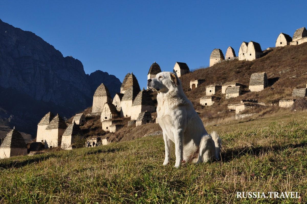 1fa11b23c40cc0d1224bc823d9172576 - Легенды горной Дигории. Северная Осетия и Кавказ